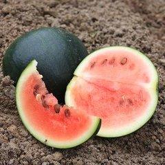 Zaad voor Fruit