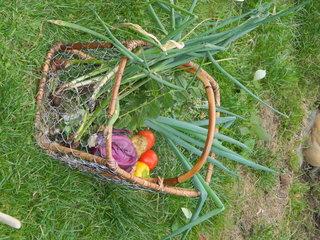 Zaad voor groenten