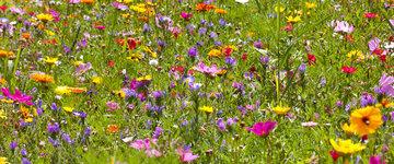 Zaad voor bloemen